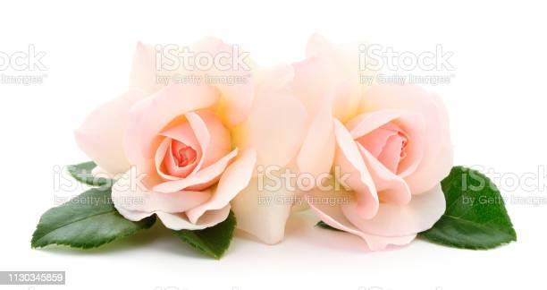 Beautiful pink roses picture id1130345859?b=1&k=6&m=1130345859&s=612x612&h=vgf9jjuuzj5gvpd4j7ykwckdneplbexkybvvtaog iu=