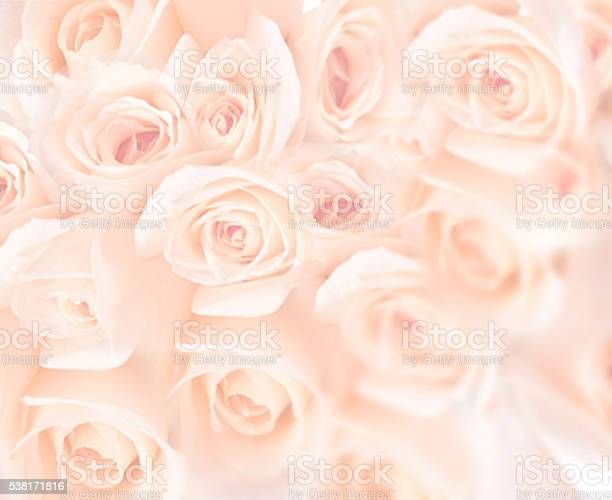 Beautiful pink roses picture id538171816?b=1&k=6&m=538171816&s=612x612&h=nmjw8liwvf1itzjcbjxyftqt8poeyi4q9sxvc he2w8=