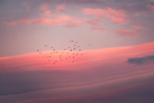 Beautiful pink sunset picture id1066475542?b=1&k=6&m=1066475542&s=612x612&w=0&h=hr7hx9khydy2b b9jfwpqplo528x3oqgxapix2qnnlw=