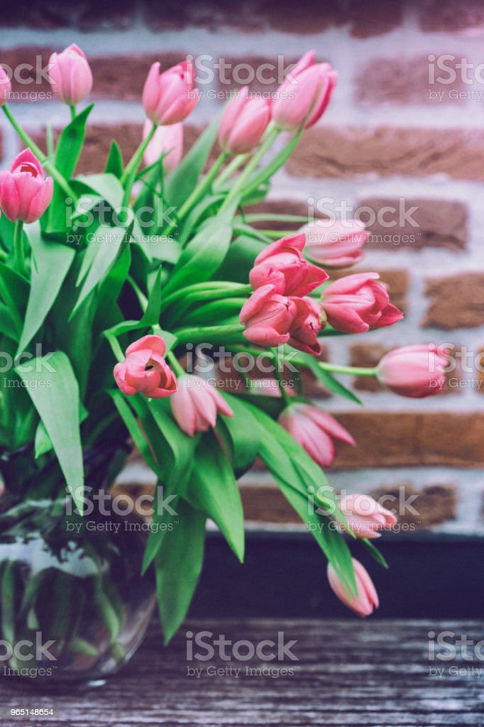 beautiful pink tulips royalty-free stock photo