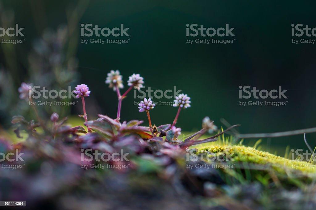 Şafakta güzel bitki - Royalty-free Arkadan aydınlatmalı Stok görsel