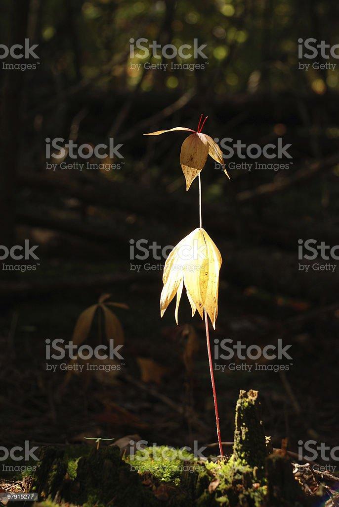 Beautiful plant royalty-free stock photo