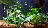 Beautiful planted aquarium with Guppies