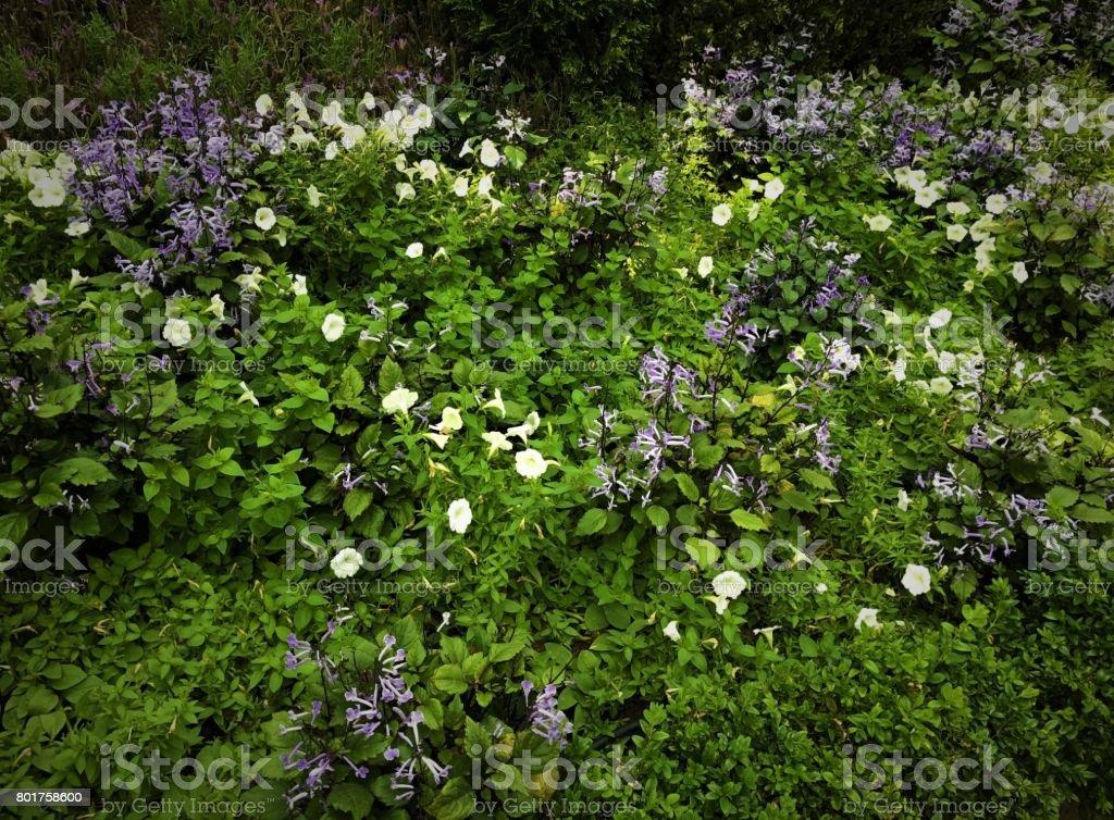 Beautiful Plants In Indoor Garden In Singapore stock photo ...