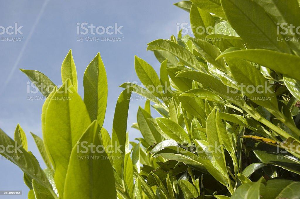 beautiful plants royalty-free stock photo