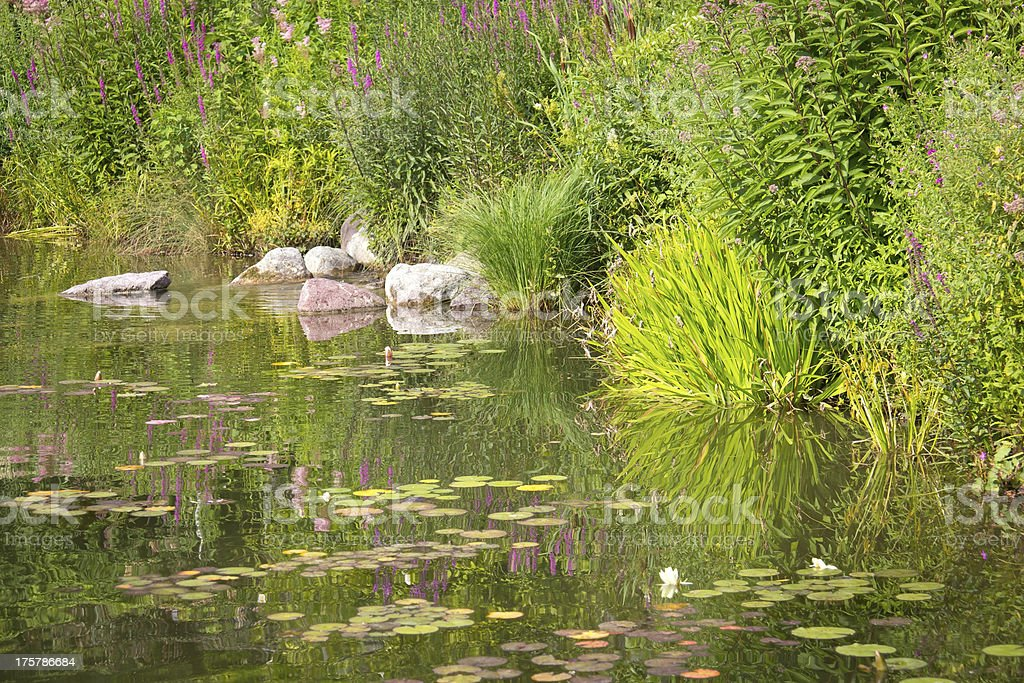 Beautiful Pond in a Park royalty-free stock photo