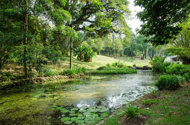 Beautiful pond in the Kuala Lumpur Perdana Botanical Gardens, it is Kuala Lumpur's first large-scale recreational park. stock photo