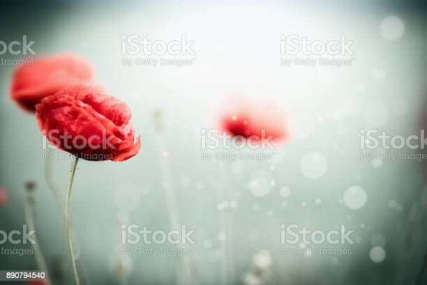 Beautiful poppies at blurred nature picture id890794540?b=1&k=6&m=890794540&s=612x612&h=3ibaak75l0do u nwfy6nwfivvh1mgk1l66socplqeg=