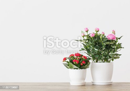 potted flowers on  background white wall