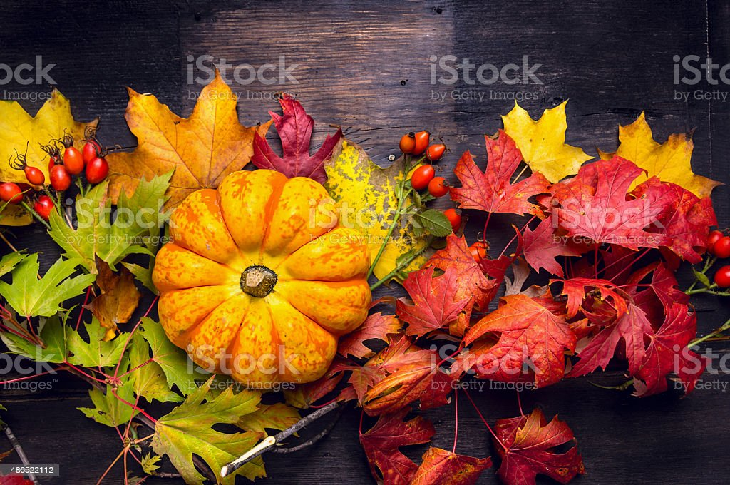 Beautiful pumpkin on colorful autumn leaves, dark stock photo