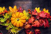 Beautiful pumpkin on colorful autumn leaves, dark