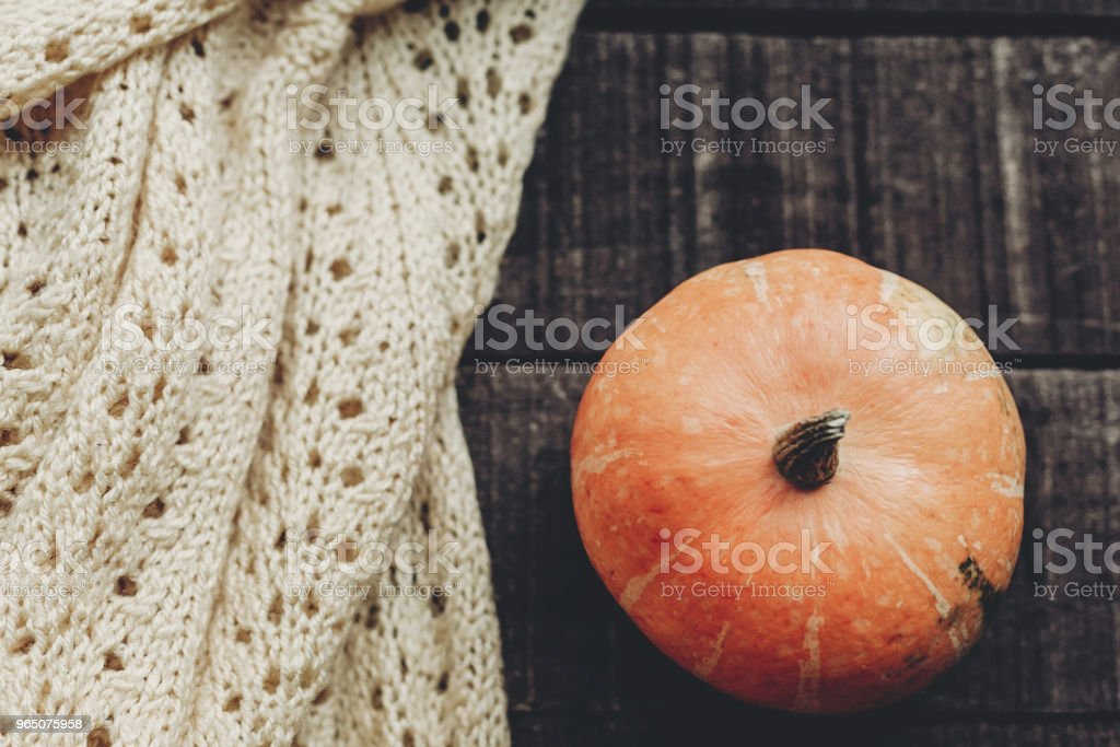 beautiful pumpkin on knitted sweater on rustic wooden background, top view. space for text. cozy autumn mood. halloween or thanksgiving concept greeting card fall flat lay. holiday zbiór zdjęć royalty-free