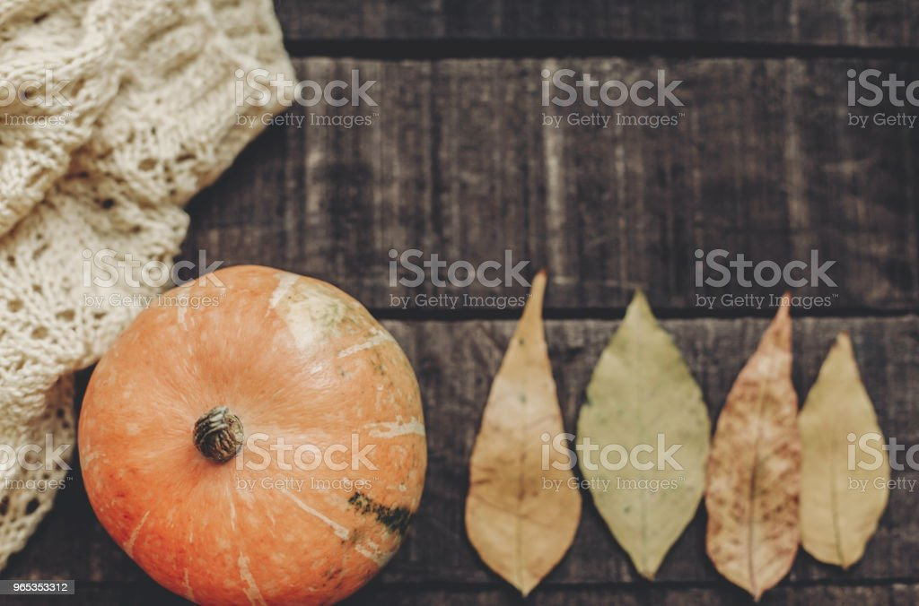 beautiful pumpkin on knitted sweater with leaves on rustic wooden background, top view. space for text. halloween or thanksgiving concept greeting card flat lay. cozy autumn mood zbiór zdjęć royalty-free