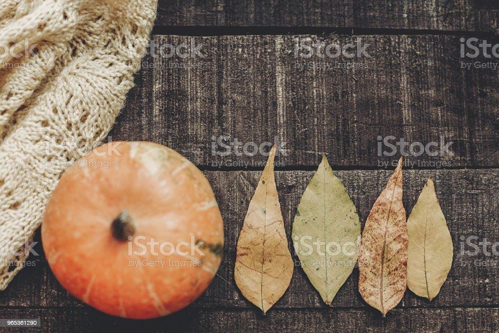소박한 나무 배경, 평면도에 잎 니트 스웨터에 아름 다운 호박 텍스트를 위한 공간입니다. 할로윈 이나 추수 감사절 개념 인사말 카드 플랫 하다입니다. 아늑한가 분위기 - 로열티 프리 10월 스톡 사진