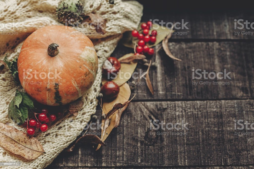 beautiful pumpkin on knitted sweater with leaves on rustic wooden background, top view. space for text. halloween or thanksgiving concept greeting card flat lay. cozy autumn mood royalty-free stock photo