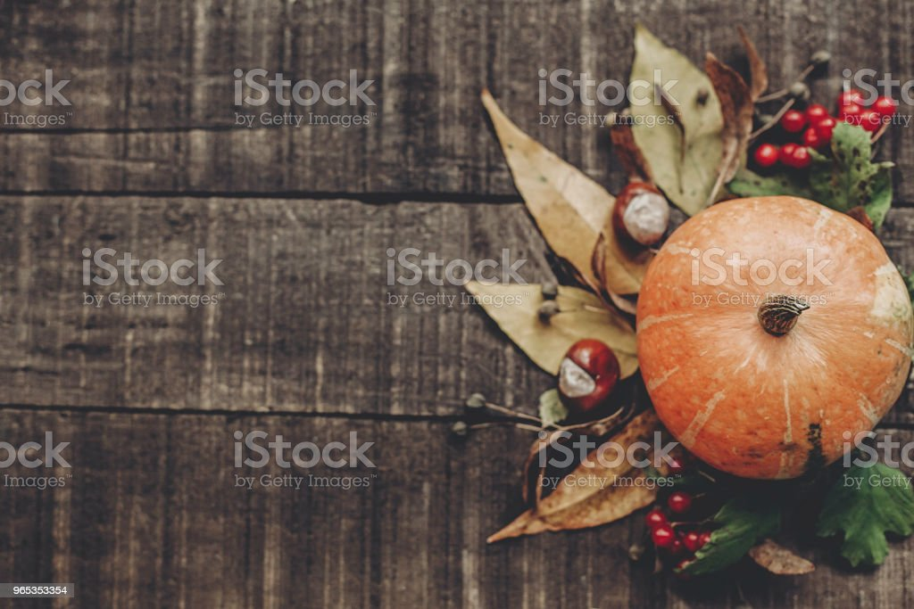 beautiful pumpkin with leaves and berries on rustic wooden background, top view. space for text. thanksgiving or halloween concept greeting card. fall image flat lay. cozy autumn mood royalty-free stock photo