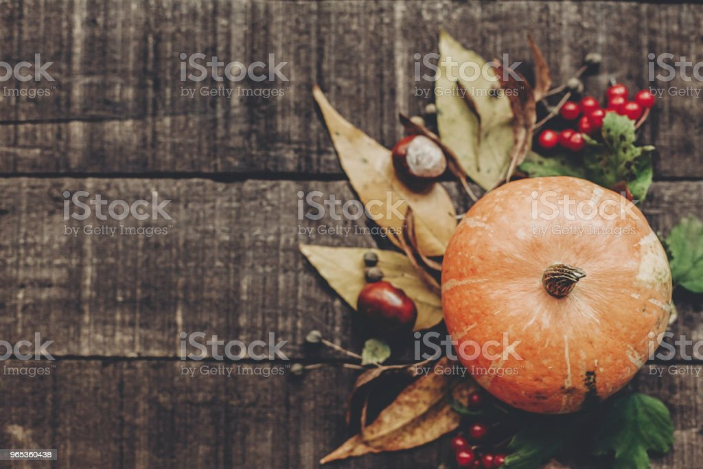 beautiful pumpkin with leaves and berries on rustic wooden background, top view. space for text. thanksgiving or halloween concept greeting card. fall image flat lay. cozy autumn mood zbiór zdjęć royalty-free