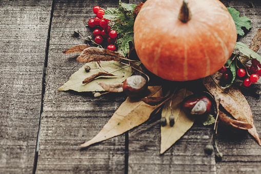 와 아름 다운 호박 잎과 소박한 나무 배경 평면도에 딸기 텍스트를 위한 공간입니다 추수 감사절 이나 할로윈 개념 인사말 카드입니다 아늑한가 분위기입니다 가 휴가 10월에 대한 스톡 사진 및 기타 이미지