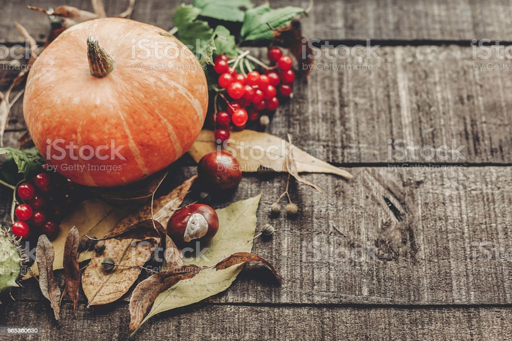 beautiful pumpkin with leaves and berries on rustic wooden background, top view. space for text. thanksgiving or halloween concept greeting card. cozy autumn mood. fall holiday royalty-free stock photo