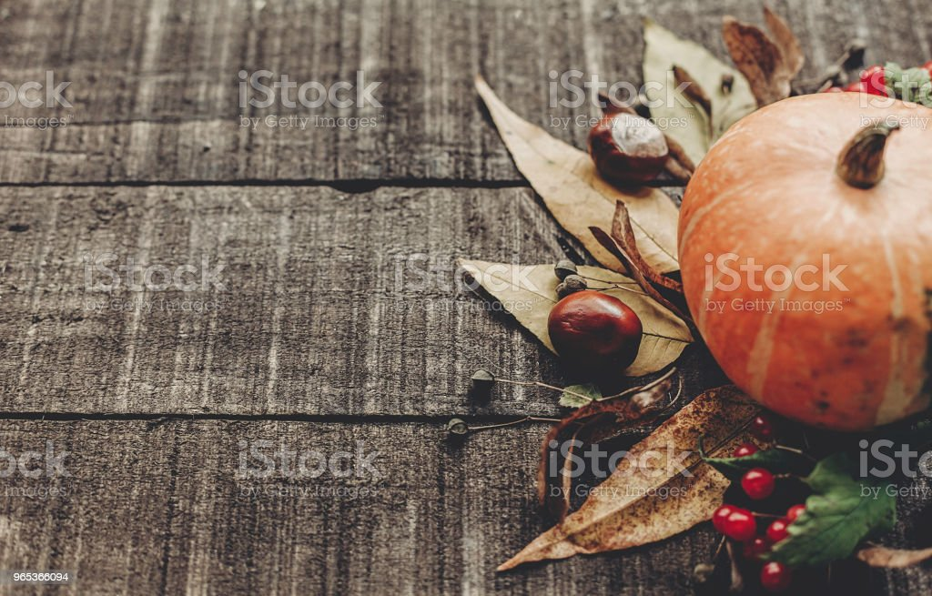 beautiful pumpkin with leaves and berries on rustic wooden background, top view. space for text. thanksgiving or halloween concept greeting card. cozy autumn mood. fall holiday zbiór zdjęć royalty-free