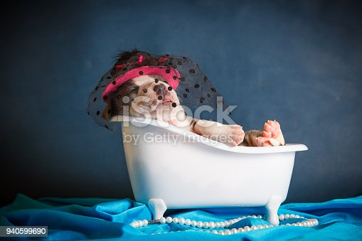istock beautiful puppy of breed Staffordshire terrier is bathed in the bathroom 940599690