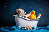 美しい子犬をトイレで洗う