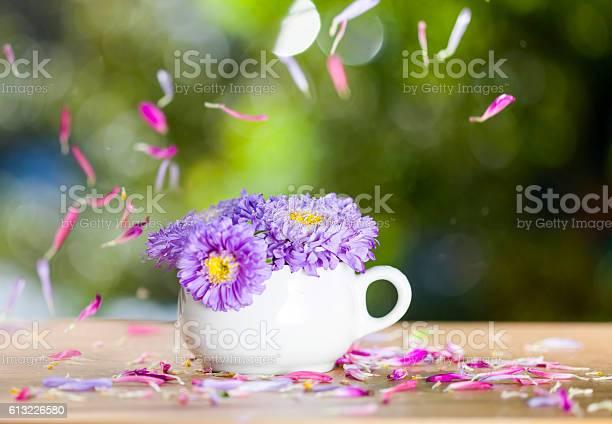 Beautiful purple aster flowers and falling petals picture id613226580?b=1&k=6&m=613226580&s=612x612&h=os7puwsymleaboe4ahjtvdysssjp1scjfobbgecfsd8=