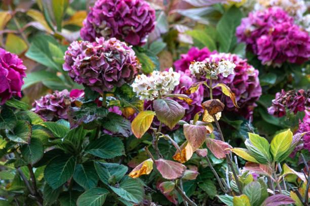 Beautiful Purple Flowers stock photo