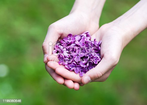 Beautiful purple lilac petals in the hands of the girl. Giving Spring flowers. Selective focus.