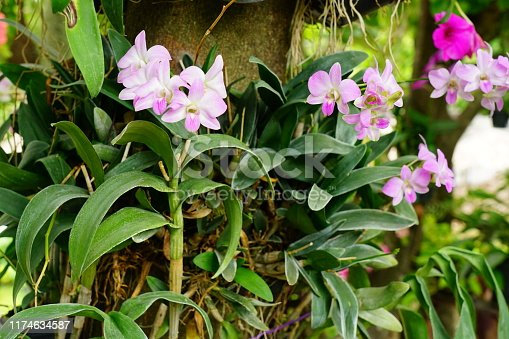 Orchid, Flower, Thank You - Phrase, Plant, Single Flower