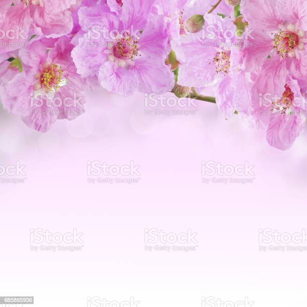 Beautiful purple queens flower soft background picture id685865936?b=1&k=6&m=685865936&s=612x612&h=gntsdcwepvvvmpcogakcooj5psoefdwzjm1sv0vnvvs=