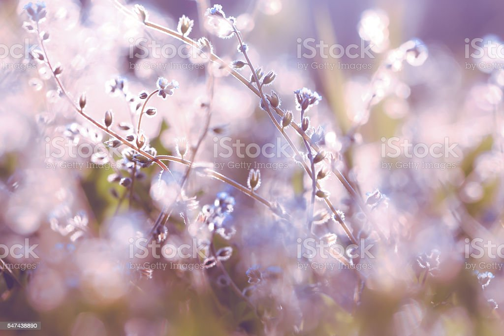 Beautiful purple wild flowers stock photo