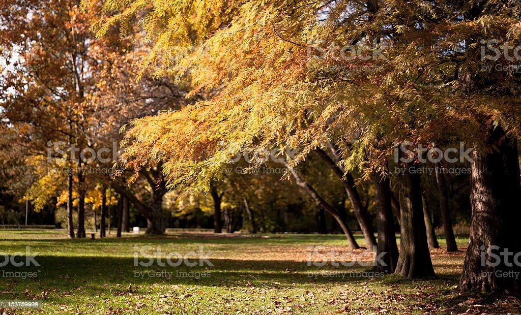Wunderschönen, ruhigen park in leuchtenden Herbsttönen – Foto