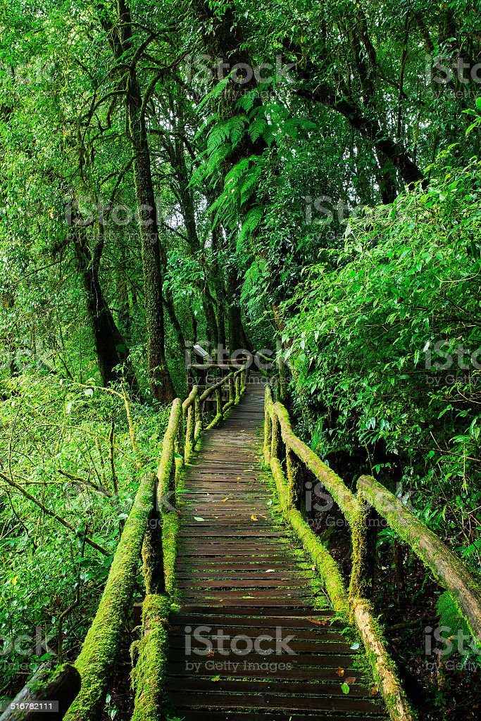 Beautiful Rain Forest At Ang Ka Nature Trail Stock Photo More Pictures Of Asia Istock