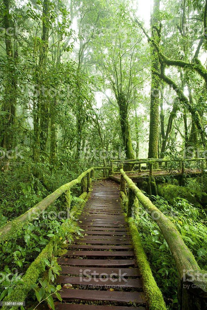 Beautiful rain forest at doi inthanon national park, Thailand royalty-free stock photo
