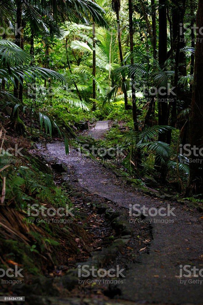 Beautiful Rainforest trail path stock photo