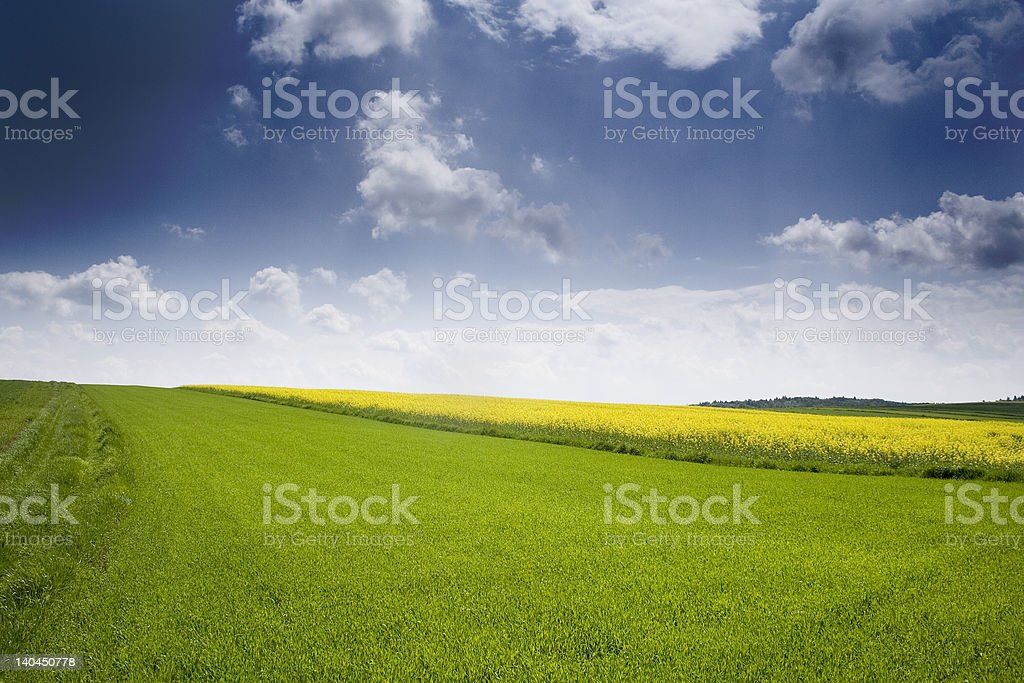 beautiful rape seed field and blue sky royalty-free stock photo