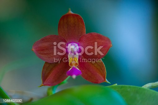 istock Beautiful rare orchid in pot on blurred background 1088402032