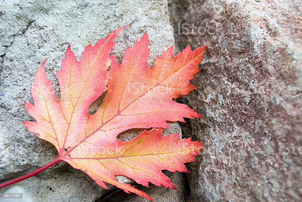 Beautiful red and orange maple leaf - Royalty-free Akçaağaç Yaprağı Stok görsel