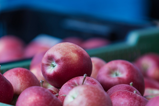 Beautiful red apples in a crate. Apples for sale.