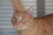 red cat head portrait