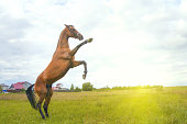 istock Beautiful red horse at summer field with flowers 841151610
