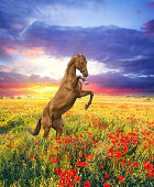 istock Beautiful red horse at summer field with flowers 841151706