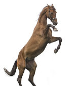 istock Beautiful red horse isolated on white 841151556