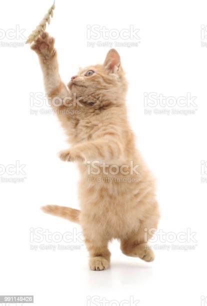 Beautiful red kitten picture id991149426?b=1&k=6&m=991149426&s=612x612&h=kjxhb2um9xvpko3iqxgxen3erd7hk5q912u 9vjkt9o=