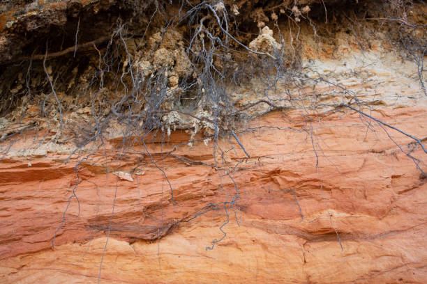 Beautiful red layered Sandstone cliff texture surface with tree roots stock photo