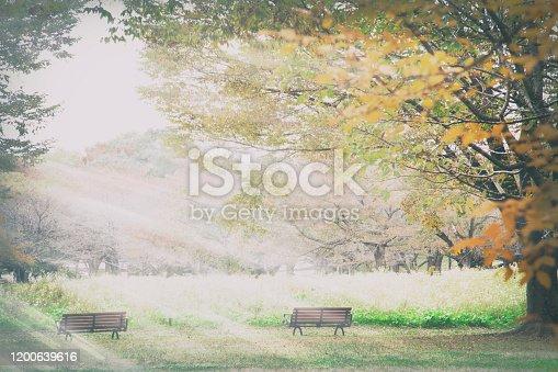 istock beautiful red leaf season with nice light 1200639616