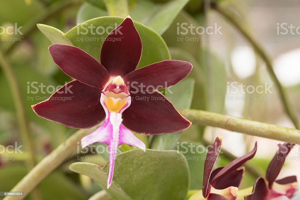 Beautiful red orchid flowers : selective focus. stock photo