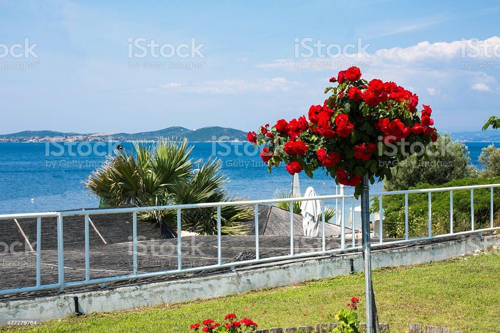 Bella Rosso Rosa Fiori Blu Mare Sullo Sfondo Fotografie Stock E