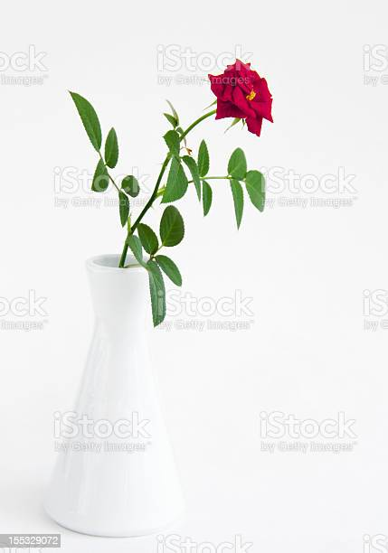 Beautiful red rose in a white vase picture id155329072?b=1&k=6&m=155329072&s=612x612&h=aks4x6sixsw8n28diui7nmsejljh7wezojrg43jzf6g=